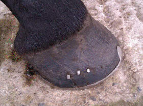 Horse Jazz Hoof Improved